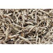 Белый чай Инь Чжэнь (Серебряные иглы)